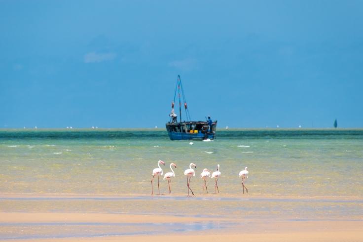 mozambique_2016-48